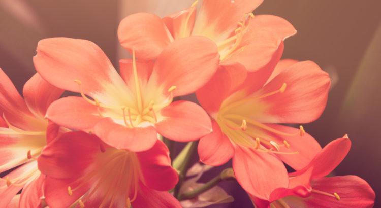 linguaggio dei fiori